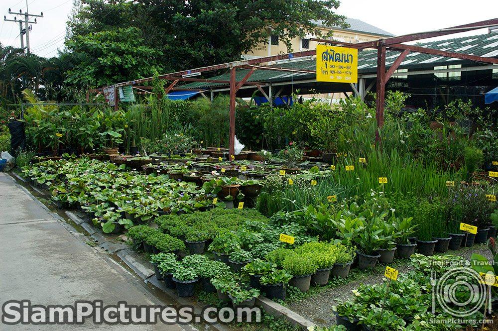 Kham Tiang flower market