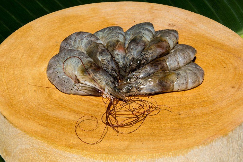shrimp or a prawn