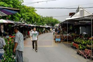 Chatuchak market, plants only day