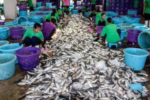 Ranong fish auction