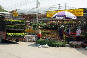 Flower market Chiang Mai is called Kham Tiang