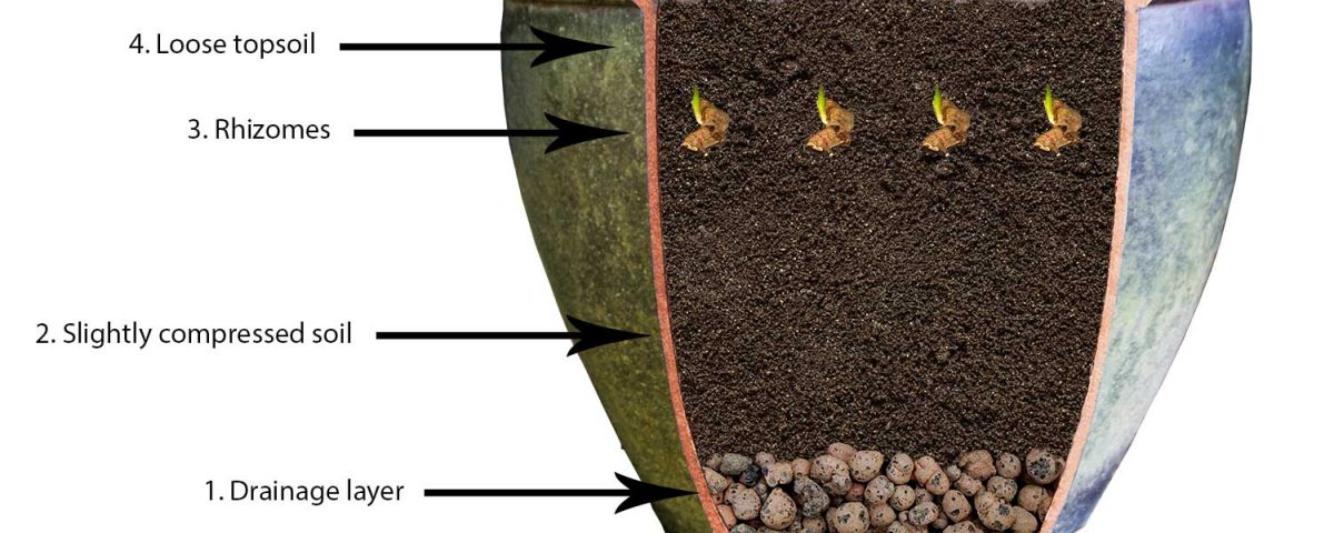 How-to-grow-turmeric-in-a-pot-a