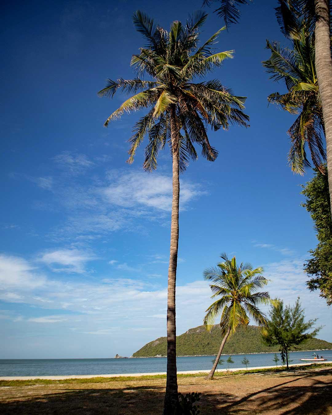 Coconut palms at Laem Sala Beach Phraya-Nakhon-Cave